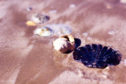 壳是我的保护色